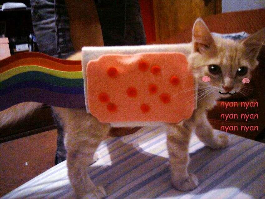 Méltán híres nyan cat