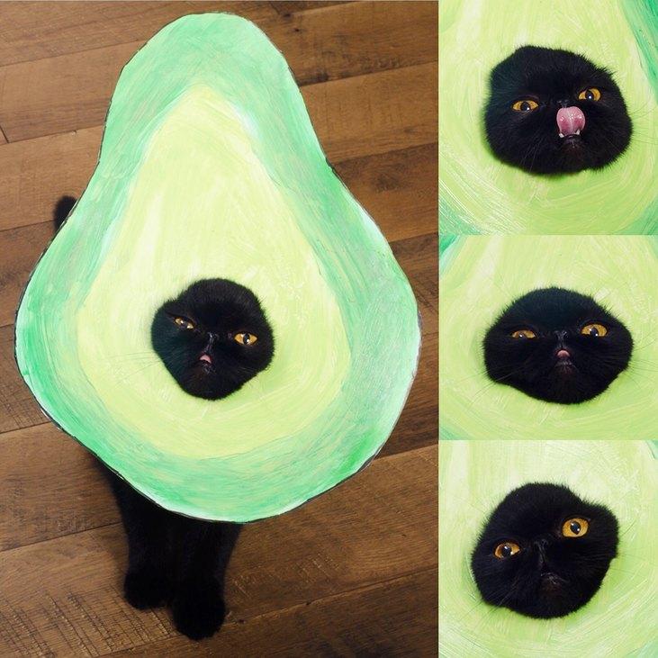 Cica, avokádó jelmezben
