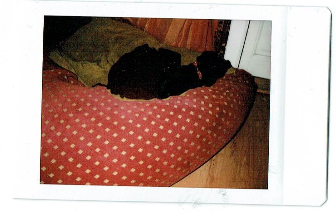 Bár elég kevéssé látszik, de Lujzi kutyánk betakarva fekszik az általa kisajátított babzsákfotelben. És ez azt jelenti, véget ért a nap, a gyerekek alszanak a szobájukban, valamelyik mindig gondosan betakargatja Lujzit is, és mehetek a szobámba. Mindig éjszaka van a legnagyobb csend, akkor szeretek legjobban dolgozni. És szeretek dolgozni. Nekem ez is boldogságot okoz.