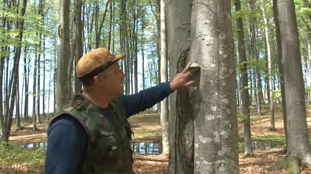 tapló egy fán