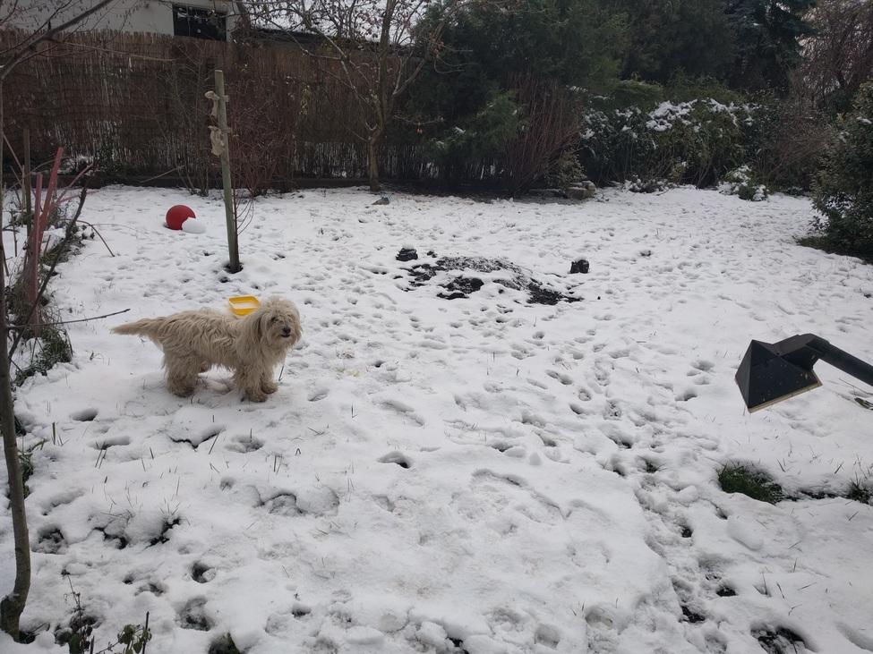 Kutya és téli kert