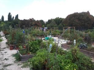 27 parcella várja a kertészkedőket