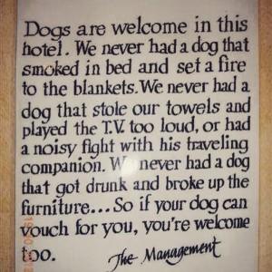 kutyaüzenet