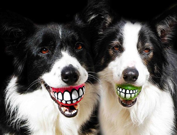 kutya-laszti